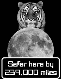Tiger - Safer in Outer Space
