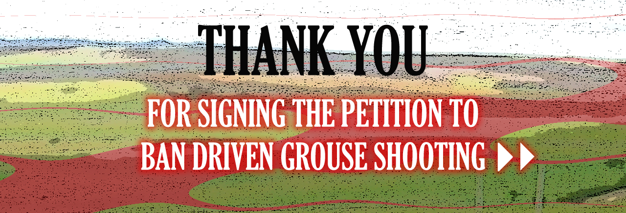 Thank you for signing the petition to ban driven grouse shooting