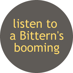 Listen to Bittern booming from the British Library