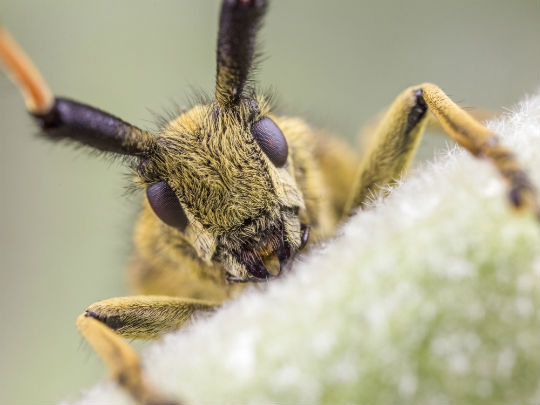 Matt Doogue's Macro Photography