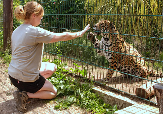 Big Cat Training workshops are a special treat for animal lovers