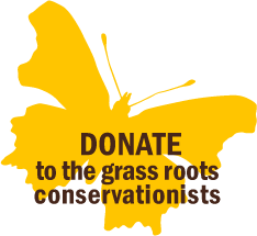 Butterfly-Donate-4