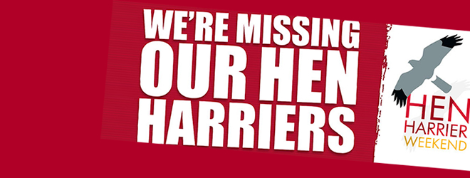 We're missing our Hen Harriers - 2016