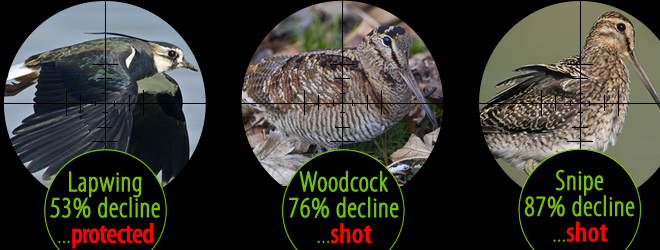 Lapwing, Woodcock and Snipe in decline