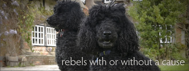 Rebels with or without a cause