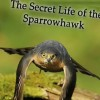 The Secret Life of Sparrowhawks